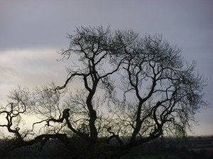The Journey from Samhain to Winter solstice