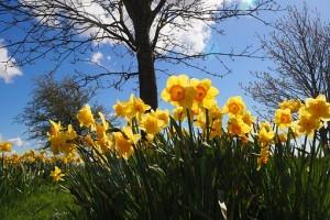 Spring Equinox Blog 2017