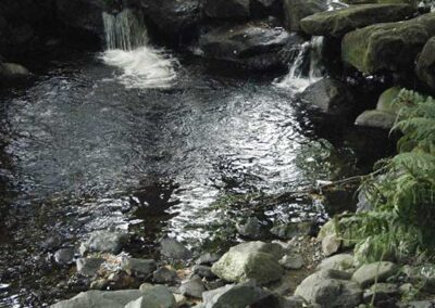 dolores whelan pilgrimages ireland